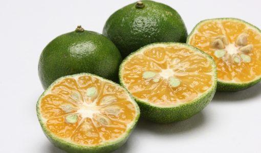 沖縄 健康 果実 シークワーサー ノビレチンが大量に入って ボケ予防に良いらしい