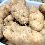 クーガ芋 トゲドコロ 琉球自然薯(じねんじょ) ジオスゲニンが多い 食べ方 購入方法など