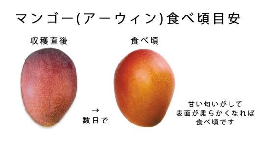 沖縄 マンゴー 美味しい 食べ頃 切り方
